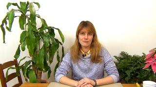 видео Драцена душистая: уход, размножение