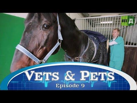 Vets & Pets (E9)
