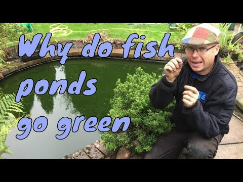 Pond Gone Green - Why Do Fish Ponds Go Green?