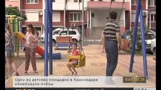 «Факты 24»: выставка беспородных собак в Новороссийске, на детской площадке поселился рой пчел