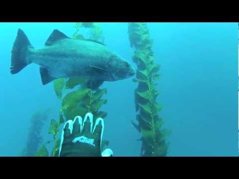 Southern California Spearfishing 2012