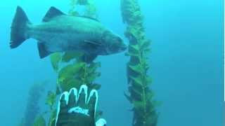 Southern California Spearfishing 2012