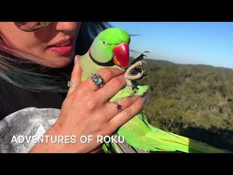 Outdoor Picnic with Parrots Part 6 of 6