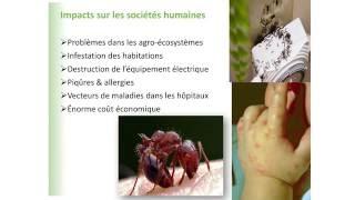 Prévoir les invasions d'insectes dans un monde plus chaud