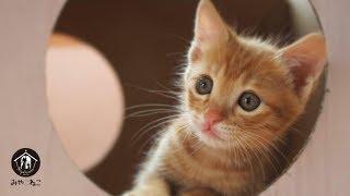 産まれたばかりで保護された赤ちゃん猫を育てるミルクボランティアをし...