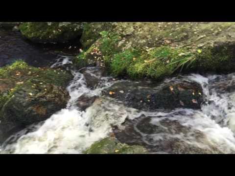 powerscourt-hotel,-wicklow,-ireland---october-12,-2015---(raw-footage)