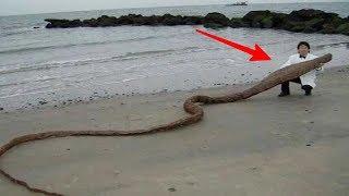 Jalan² di pantai, pria ini temukan Benda Aneh, Yg ternyata itu adalah...WOW..