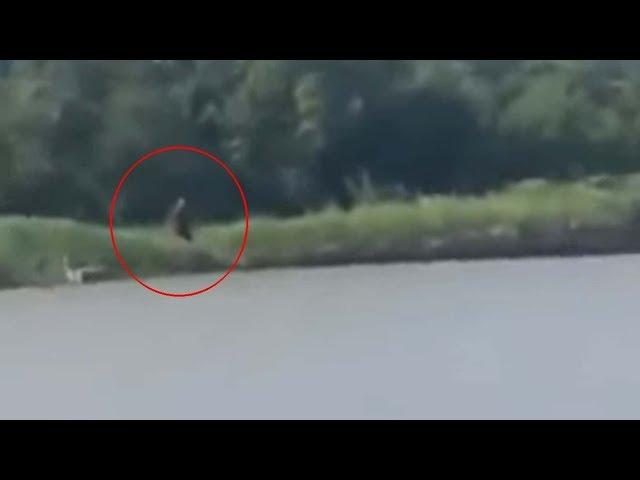 Pescadores graban una criatura 'mitad humana y mitad perro' en un río de Texas