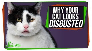 Why Is Your Cat So Disgusted With You?