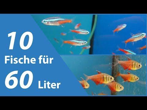 10 Fische für kleine Aquarien (60 Liter)