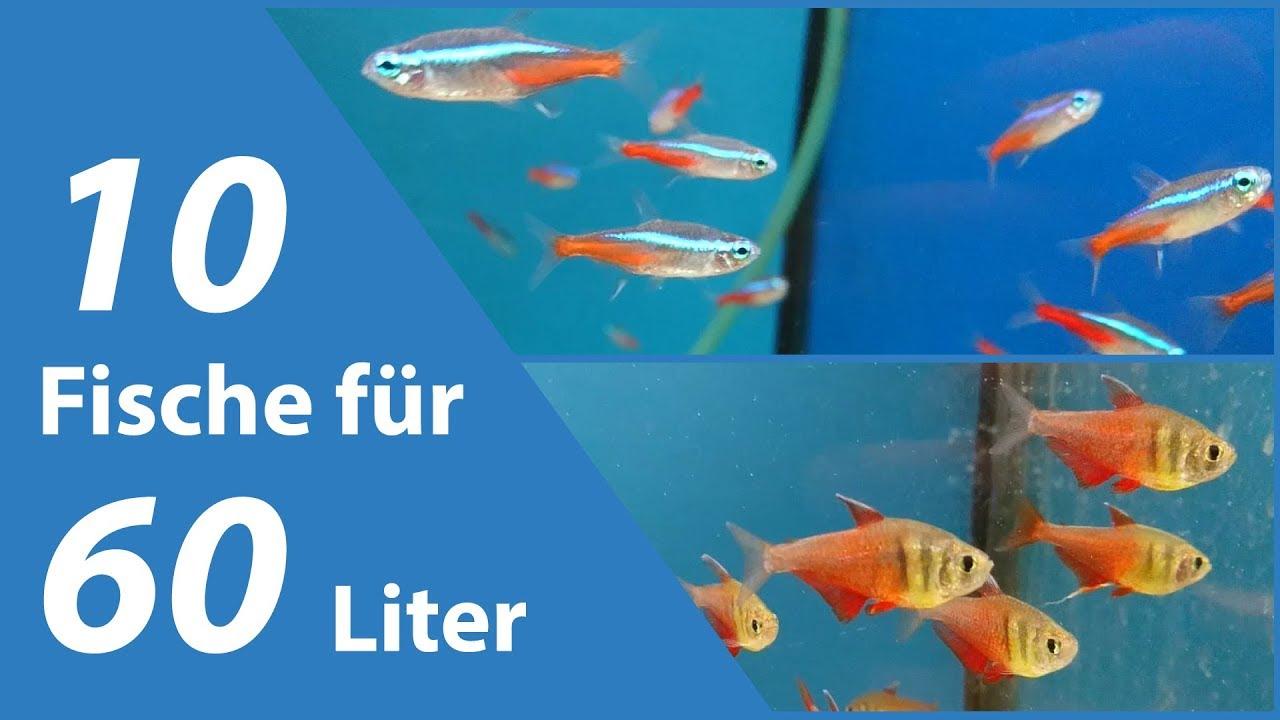 10 fische f r kleine aquarien 60 liter doovi for Kleine zierfische