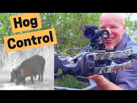 Hog control with night vision on a crossbow | Hog hunting video