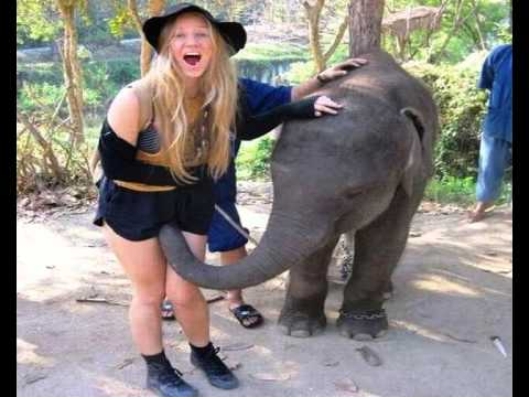 Gimme Gimme Good Lovin - Crazy Elephant