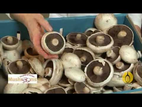 Healthy Cooking and Eating Well – Mushrooms