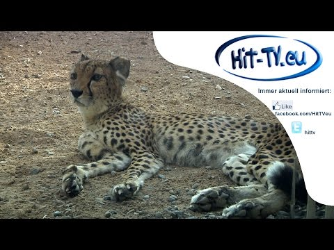 Sharjah - Arabia's Wildlife Centre 08.10.2014