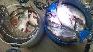 Рыбалка На СЕТИ Добыча Сплавной Сетью