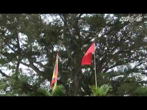 Cây đa ngàn tuổi Di sản Việt Nam