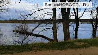Разлив на реке Ипуть у села Перевоз