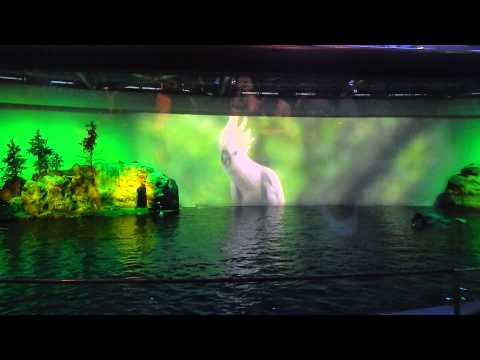 The Aquatic Show at the Shedd Aquarium