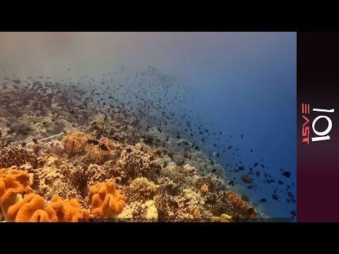 🇮🇩 Indonesia: The Last Reef on Earth | 101 East
