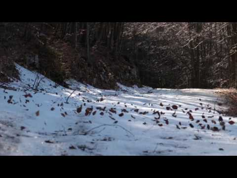 Relaxing Sound of Wind Blowing Leaves Across Snow / 1 Hour Winter Wind
