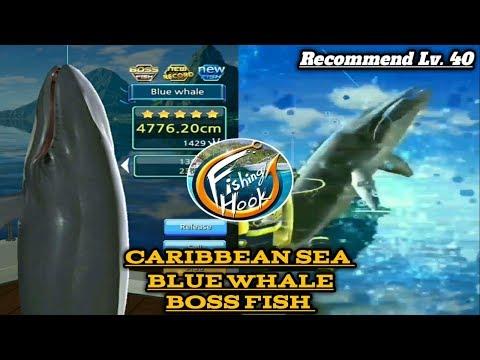 Paus Boss (Blue whale) - caribbean sea // Kail pancing / fishing hook