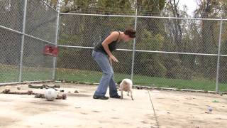 Knox County Animal Shelter -