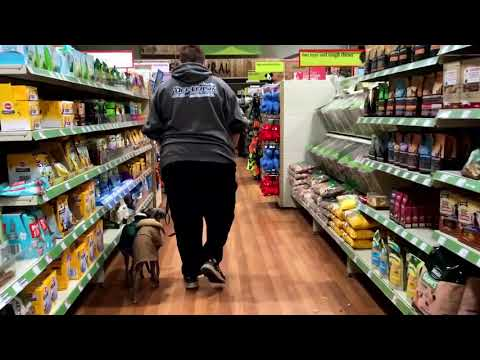 Italian Greyhound, Mondo & Benigni | Dog Training in London