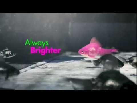 ABC2 - 'Fish in Traffic' Ident [2015]