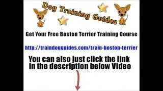 Awesome Tips On How To Train A Boston Terrier