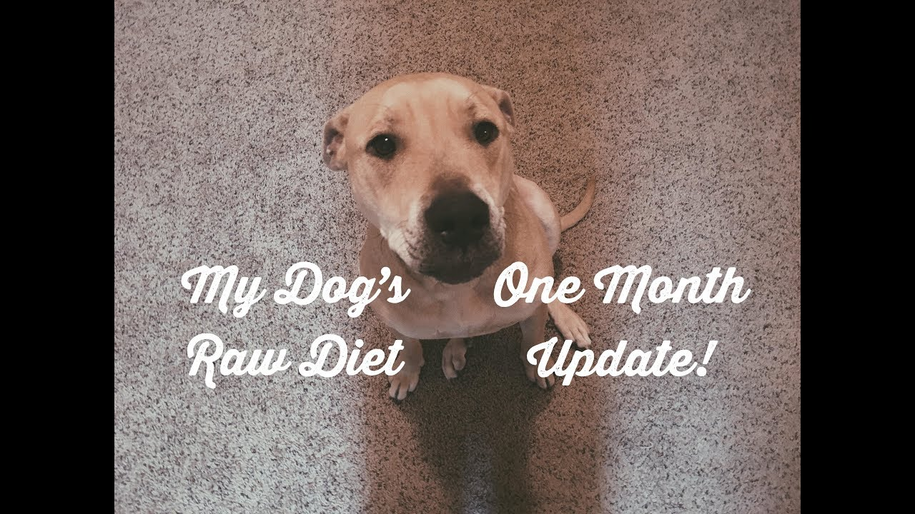 Image Wallpaper » Our Dog One Month Update