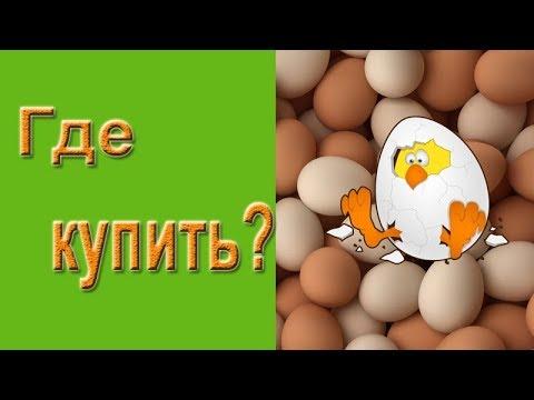 Яйца бройлеров Кобб 500 в инкубатор Несушка 36 - YouTube