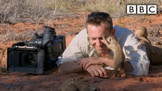 Magic meerkat moments - BBC