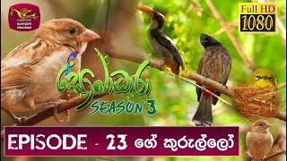 Sobadhara - Sri Lanka Wildlife Documentary | 2019-08-23 | (ගේ කුරුල්ලා) House sparrow Thumbnail