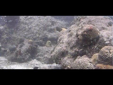 Caribbean Coral Reef Camera by Explore.org | The Dodo Tranquil Tuesdays LIVE