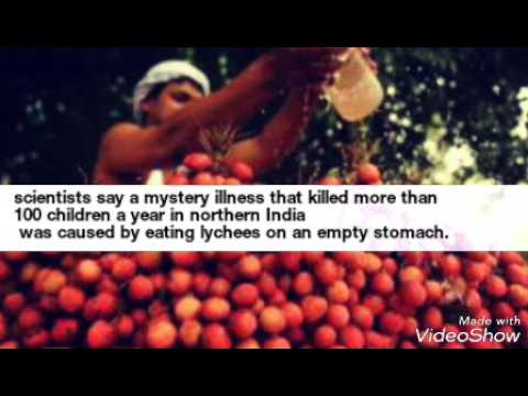Unripe lychee Is poisonous and could be lethal for you..India, poisonous fruit ever