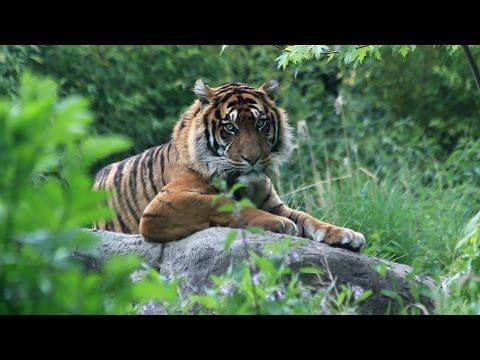 Diergaarde Blijdorp Rotterdam Zoo 2016 - The Netherlands