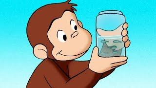 好奇的喬治 🐵Curious George Chinese 🐵 好奇猴喬治發現蝌蚪 🐵第1季 🐵动画片 🐵卡通 🐵动画 🐵Cartoon 🐵Animation