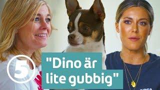 Wahlgrens värld | Bianca vill veta vad hundarna tycker och tänker på riktigt | Torsdagar 21.00