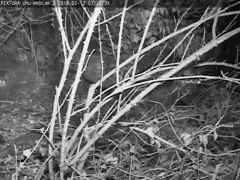 12/02/2018  07:21 Leo visits last years nest place