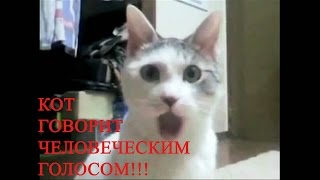 кот говорит человеческим голосом кот ругается умный кот