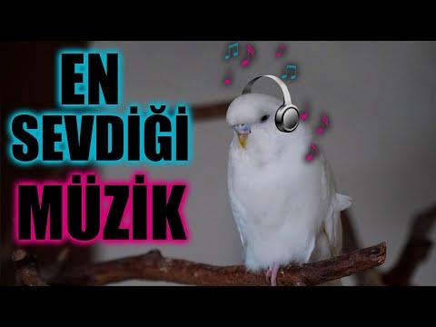 Muhabbet Kuşun Sevdiği Şarkılar Sevdiği sesler ve Müzikler