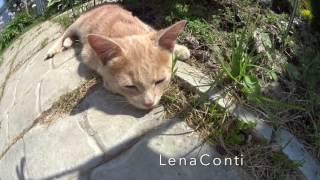 LC234: Женскийклуб.Дача. В мире животных! Как определить пол Кот или Кошка 🐱
