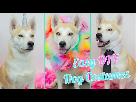 9006ba33663 Easy DIY Dog Costumes | HG Craft | HelloGiggles - YouTube