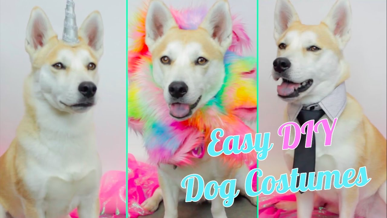 Easy DIY Dog Costumes - YouTube