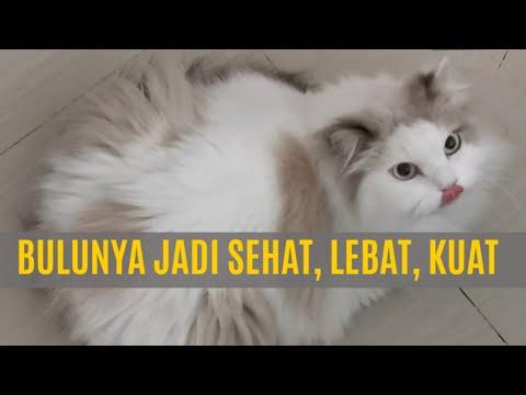 Rahasia Bulu Kucing Sehat