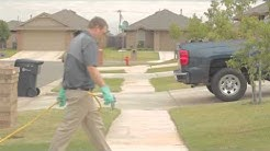 Insect and Rodent Exterminators | Oklahoma City, OK | Avenge Pest Control