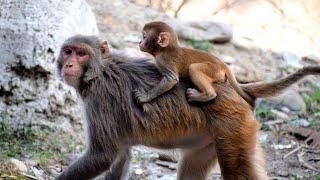 SURVIVING THE AMAZON JUNGLE JUNIORS Hindi _ WILD Life _ ANIMAL PLANET _ WORLD OF HINDI DOCUMENTARY