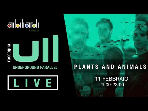 Plants and Animals ai biliardi 11/02/2017