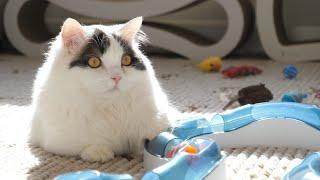 고양이가 3년동안 가지고 놀던 장난감 업글했습니다! 굴…